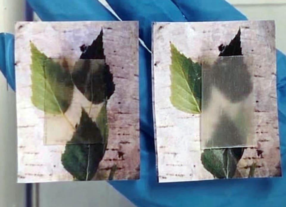 Ученые создают прозрачные деревянные композиты, которые однажды могут заменить стекло